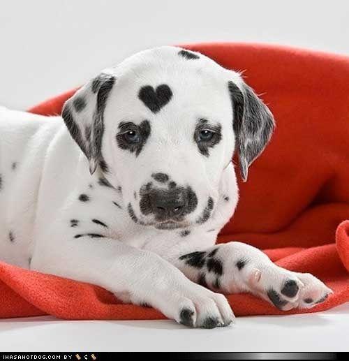 Hunderassen Bilder Mit Namen Für Facebook - Hunderassen Bilder Mit Namen Für Facebook