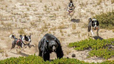 Hunderassen Der Welt 390x220 - Hunderassen Der Welt