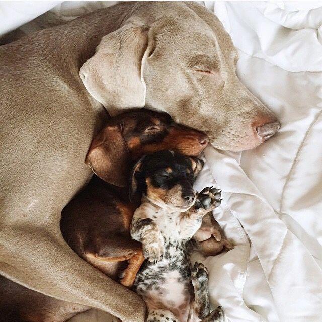 Hunderassen Für Hundesport - Hunderassen Für Hundesport
