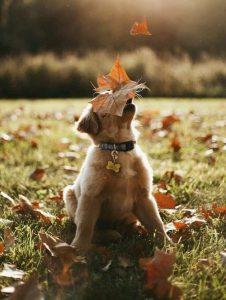 Hunderassen Groß Bilder Für Facebook 226x300 - Hunderassen Groß Bilder Für Facebook