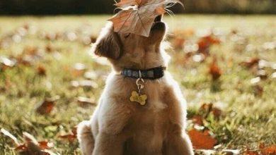 Hunderassen Groß Bilder Für Facebook 390x220 - Hunderassen Groß Bilder Für Facebook