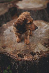 Hunderassen Groß Bilder Kostenlos Herunterladen 200x300 - Hunderassen Groß Bilder Kostenlos Herunterladen