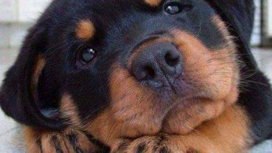 Hunderassen Große Hunde Langhaar 390x220 - Hunderassen Große Hunde Langhaar