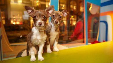 Hunderassen Im Überblick Mit Bild 390x220 - Hunderassen Im Überblick Mit Bild