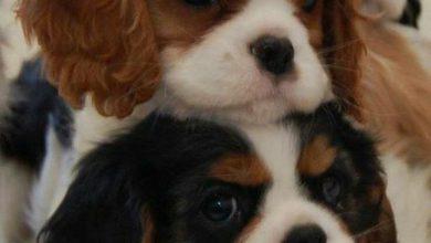 Hunderassen In Bildern Für Whatsapp 390x220 - Hunderassen In Bildern Für Whatsapp
