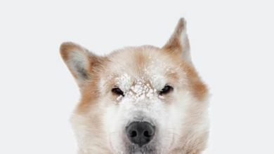 Hunderassen In Bildern Kostenlos Herunterladen 390x220 - Hunderassen In Bildern Kostenlos Herunterladen