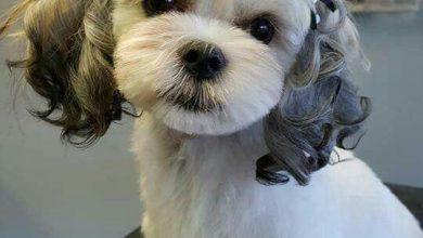 Hunderassen Jagdhunde Bilder Für Facebook 390x220 - Hunderassen Jagdhunde Bilder Für Facebook