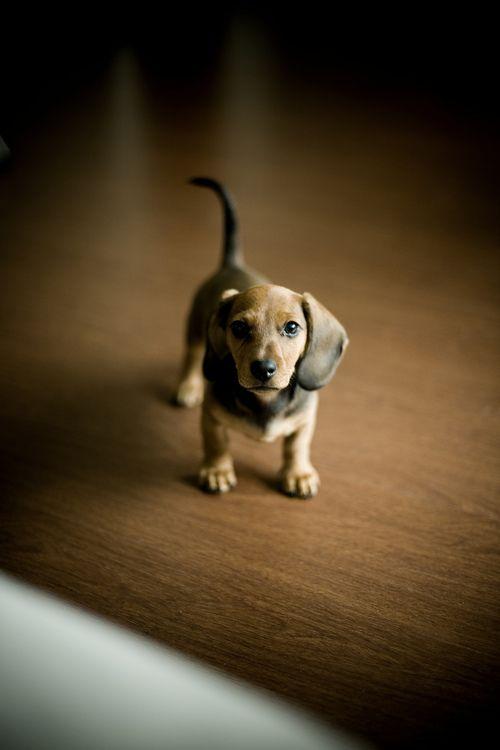 Hunderassen Jagdhunde Bilder - Hunderassen Jagdhunde Bilder