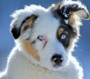 Hunderassen Kampfhunde Bilder Kostenlos 300x262 - Hunderassen Kampfhunde Bilder Kostenlos