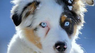 Hunderassen Kampfhunde Bilder Kostenlos 390x220 - Hunderassen Kampfhunde Bilder Kostenlos