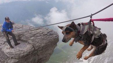 Hunderassen Kampfhunde Bilder Kostenlos Herunterladen 390x220 - Hunderassen Kampfhunde Bilder Kostenlos Herunterladen
