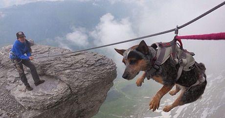 Hunderassen Kampfhunde Bilder Kostenlos Herunterladen - Hunderassen Kampfhunde Bilder Kostenlos Herunterladen