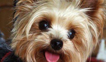 Hunderassen Kleinbleibend 375x220 - Hunderassen Kleinbleibend