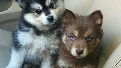 Hunderassen Kleine Hunde 390x220 - Hunderassen Kleine Hunde