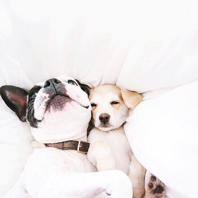 Hunderassen Kleine Hunde Langhaar - Hunderassen Kleine Hunde Langhaar