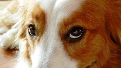 Hunderassen Kleine Hunde Liste 390x220 - Hunderassen Kleine Hunde Liste