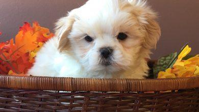 Hunderassen Kleine Hunde Mit Bild 390x220 - Hunderassen Kleine Hunde Mit Bild