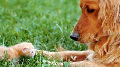Hunderassen Kleine Hunde Weiß 390x220 - Hunderassen Kleine Hunde Weiß