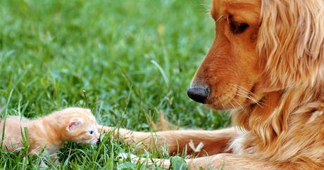 Hunderassen Kleine Hunde Weiß - Hunderassen Kleine Hunde Weiß