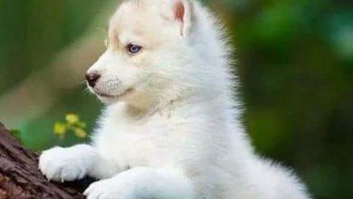 Hunderassen Mit Bild Große Hunde 390x220 - Hunderassen Mit Bild Große Hunde