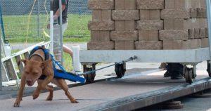 Hunderassen Mit Bild Welpen 300x158 - Hunderassen Mit Bild Welpen