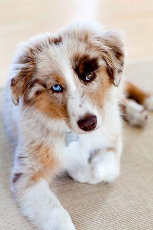 Hunderassen Mit Bilder Und Beschreibung - Hunderassen Mit Bilder Und Beschreibung