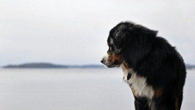 Hunderassen Mit Bildern Übersicht Kostenlos 390x220 - Hunderassen Mit Bildern Übersicht Kostenlos