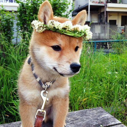 Hunderassen Mit Bildern Übersicht - Hunderassen Mit Bildern Übersicht
