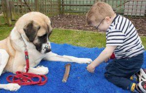 Hunderassen Mit Bildern Und Beschreibung Für Facebook 300x190 - Hunderassen Mit Bildern Und Beschreibung Für Facebook