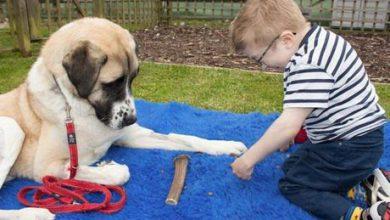 Hunderassen Mit Bildern Und Beschreibung Für Facebook 390x220 - Hunderassen Mit Bildern Und Beschreibung Für Facebook