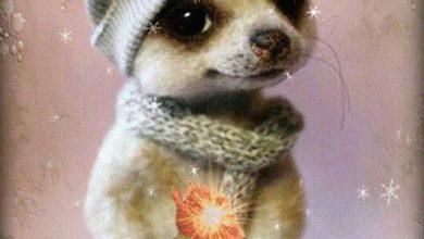 Hunderassen Mit Bildern Und Beschreibung Für Whatsapp 390x220 - Hunderassen Mit Bildern Und Beschreibung Für Whatsapp