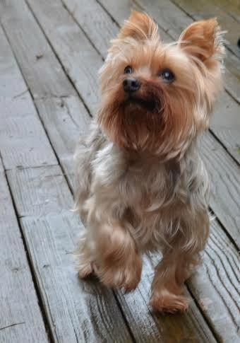 Hunderassen Mit Bildern Und Beschreibung Kostenlos - Hunderassen Mit Bildern Und Beschreibung Kostenlos