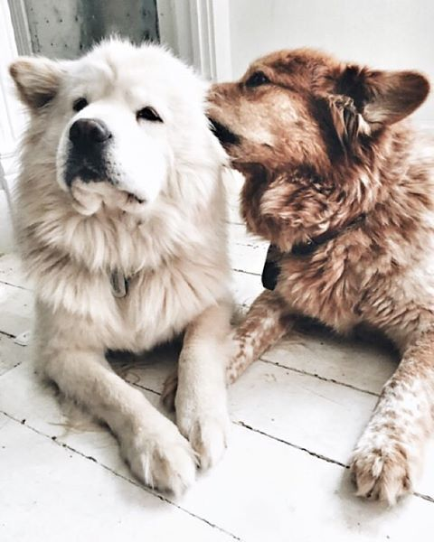 Hunderassen Mit Langen Schlappohren - Hunderassen Mit Langen Schlappohren