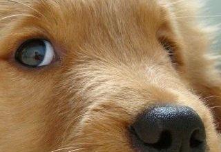 Hunderassen Mittel 320x220 - Hunderassen Mittel