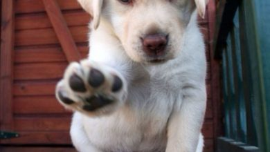 Hunderassen Mittelgroß Bilder 390x220 - Hunderassen Mittelgroß Bilder