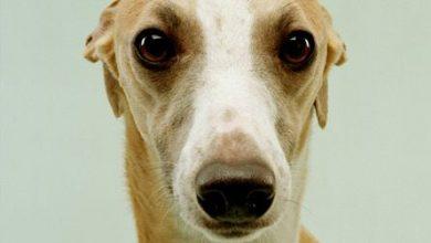 Hunderassen Mittelgroß Bilder Für Facebook 390x220 - Hunderassen Mittelgroß Bilder Für Facebook