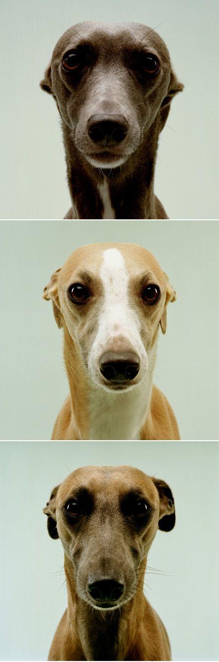 Hunderassen Mittelgroß Bilder Für Facebook - Hunderassen Mittelgroß Bilder Für Facebook