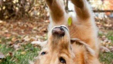 Hunderassen Mittelgroß Bilder Für Whatsapp 390x220 - Hunderassen Mittelgroß Bilder Für Whatsapp