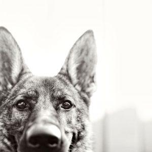 Hunderassen Mittelgroß Bilder Kostenlos Herunterladen 300x300 - Hunderassen Mittelgroß Bilder Kostenlos Herunterladen