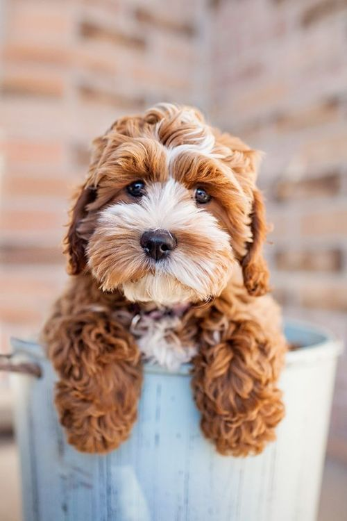 Hunderassen Nach Charakter - Hunderassen Nach Charakter