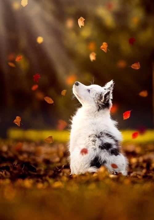 Hunderassen Namen Mit Bild - Hunderassen Namen Mit Bild