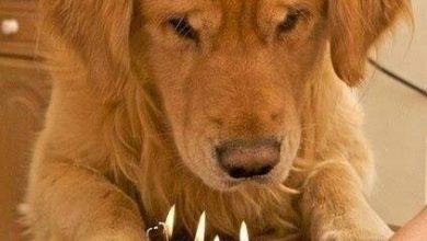 Hunderassen Namen Und Bilder Für Facebook 390x220 - Hunderassen Namen Und Bilder Für Facebook