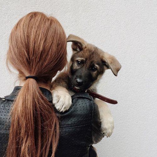 Hunderassen Schoßhunde - Hunderassen Schoßhunde