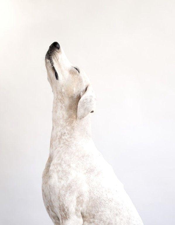 Hunderassen Sehr Klein - Hunderassen Sehr Klein