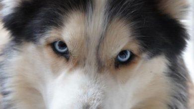 Hunderassen Sehr Kleine Hunde 390x220 - Hunderassen Sehr Kleine Hunde