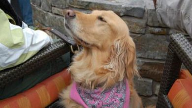 Hunderassen Terrier Bilder Für Facebook 390x220 - Hunderassen Terrier Bilder Für Facebook