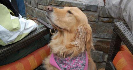 Hunderassen Terrier Bilder Für Facebook - Hunderassen Terrier Bilder Für Facebook