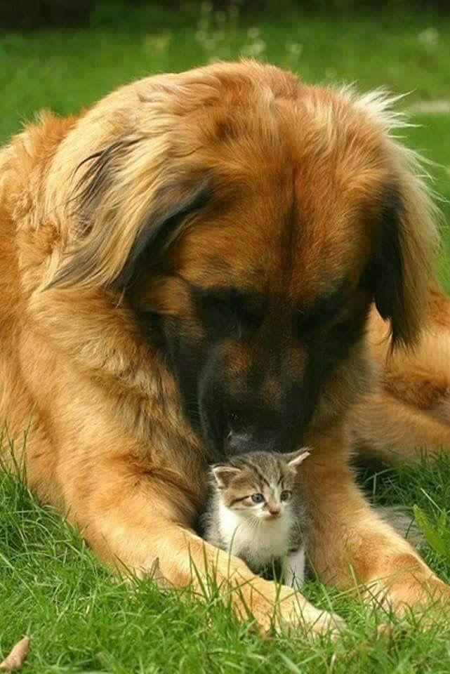 Hunderassen Terrier Bilder Für Whatsapp - Hunderassen Terrier Bilder Für Whatsapp