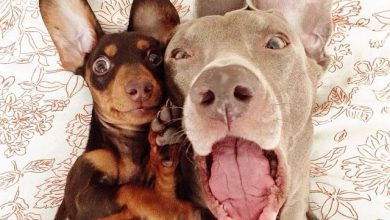 Hunderassen Terrier Bilder Kostenlos 390x220 - Hunderassen Terrier Bilder Kostenlos