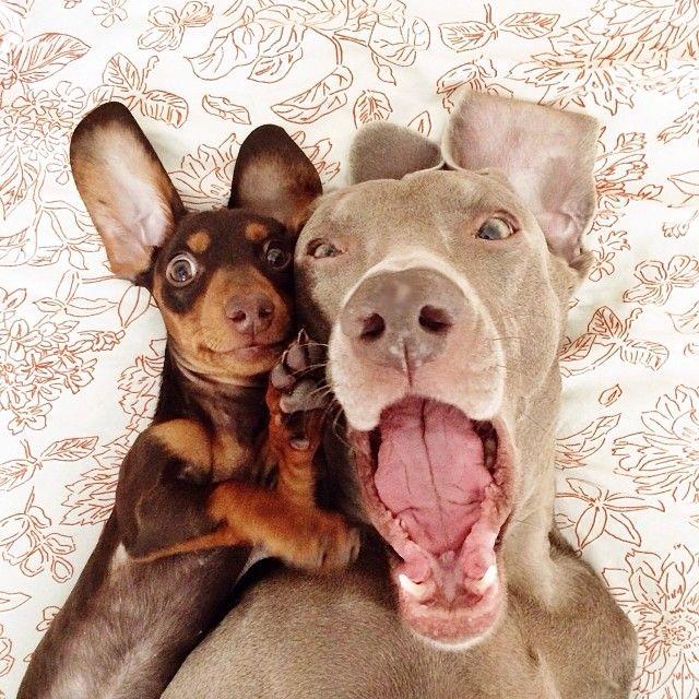 Hunderassen Terrier Bilder Kostenlos - Hunderassen Terrier Bilder Kostenlos